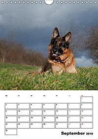 Deutscher Schäferhund - Der beste Freund des Menschen (Wandkalender 2019 DIN A4 hoch) - Produktdetailbild 9