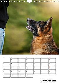 Deutscher Schäferhund - Der beste Freund des Menschen (Wandkalender 2019 DIN A4 hoch) - Produktdetailbild 10