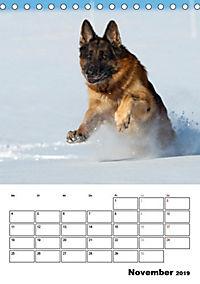 Deutscher Schäferhund - Der beste Freund des Menschen (Tischkalender 2019 DIN A5 hoch) - Produktdetailbild 11