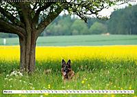 Deutscher Schäferhund - Der beste Freund des Menschen (Wandkalender 2019 DIN A2 quer) - Produktdetailbild 5
