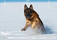 Deutscher Schäferhund - Der beste Freund des Menschen (Wandkalender 2019 DIN A2 quer) - Produktdetailbild 11