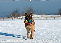 Deutscher Schäferhund - Der beste Freund des Menschen (Wandkalender 2019 DIN A2 quer) - Produktdetailbild 1