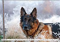Deutscher Schäferhund - Der beste Freund des Menschen (Wandkalender 2019 DIN A2 quer) - Produktdetailbild 2