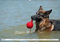Deutscher Schäferhund - Der beste Freund des Menschen (Wandkalender 2019 DIN A2 quer) - Produktdetailbild 6