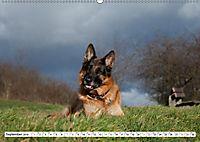 Deutscher Schäferhund - Der beste Freund des Menschen (Wandkalender 2019 DIN A2 quer) - Produktdetailbild 9