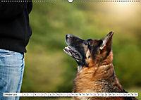 Deutscher Schäferhund - Der beste Freund des Menschen (Wandkalender 2019 DIN A2 quer) - Produktdetailbild 10