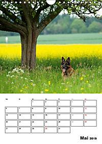 Deutscher Schäferhund - Der beste Freund des Menschen (Wandkalender 2019 DIN A4 hoch) - Produktdetailbild 5