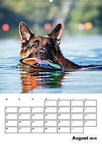 Deutscher Schäferhund - Der beste Freund des Menschen (Wandkalender 2019 DIN A2 hoch) - Produktdetailbild 8