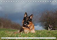 Deutscher Schäferhund - Der beste Freund des Menschen (Tischkalender 2019 DIN A5 quer) - Produktdetailbild 9
