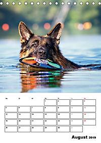 Deutscher Schäferhund - Der beste Freund des Menschen (Tischkalender 2019 DIN A5 hoch) - Produktdetailbild 8