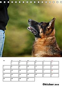 Deutscher Schäferhund - Der beste Freund des Menschen (Tischkalender 2019 DIN A5 hoch) - Produktdetailbild 10