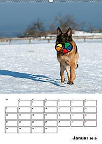 Deutscher Schäferhund - Der beste Freund des Menschen (Wandkalender 2019 DIN A2 hoch) - Produktdetailbild 1