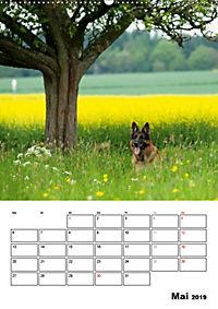 Deutscher Schäferhund - Der beste Freund des Menschen (Wandkalender 2019 DIN A2 hoch) - Produktdetailbild 5