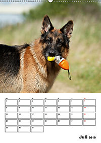 Deutscher Schäferhund - Der beste Freund des Menschen (Wandkalender 2019 DIN A2 hoch) - Produktdetailbild 7