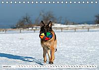 Deutscher Schäferhund - Der beste Freund des Menschen (Tischkalender 2019 DIN A5 quer) - Produktdetailbild 1