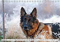Deutscher Schäferhund - Der beste Freund des Menschen (Tischkalender 2019 DIN A5 quer) - Produktdetailbild 2