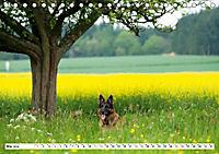Deutscher Schäferhund - Der beste Freund des Menschen (Tischkalender 2019 DIN A5 quer) - Produktdetailbild 5