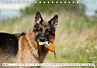 Deutscher Schäferhund - Der beste Freund des Menschen (Tischkalender 2019 DIN A5 quer) - Produktdetailbild 7