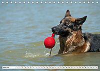 Deutscher Schäferhund - Der beste Freund des Menschen (Tischkalender 2019 DIN A5 quer) - Produktdetailbild 6