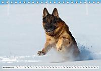 Deutscher Schäferhund - Der beste Freund des Menschen (Tischkalender 2019 DIN A5 quer) - Produktdetailbild 11