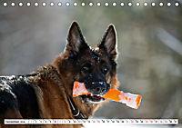Deutscher Schäferhund - Der beste Freund des Menschen (Tischkalender 2019 DIN A5 quer) - Produktdetailbild 12