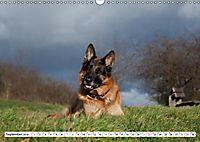 Deutscher Schäferhund - Der beste Freund des Menschen (Wandkalender 2019 DIN A3 quer) - Produktdetailbild 9