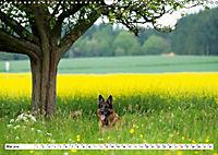 Deutscher Schäferhund - Der beste Freund des Menschen (Wandkalender 2019 DIN A3 quer) - Produktdetailbild 5