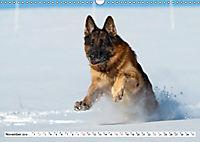 Deutscher Schäferhund - Der beste Freund des Menschen (Wandkalender 2019 DIN A3 quer) - Produktdetailbild 11
