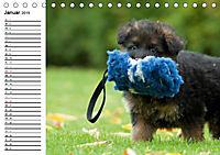 Deutscher Schäferhund - Welpen (Tischkalender 2019 DIN A5 quer) - Produktdetailbild 1