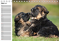 Deutscher Schäferhund - Welpen (Tischkalender 2019 DIN A5 quer) - Produktdetailbild 3