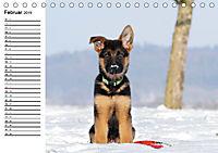 Deutscher Schäferhund - Welpen (Tischkalender 2019 DIN A5 quer) - Produktdetailbild 2