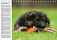 Deutscher Schäferhund - Welpen (Tischkalender 2019 DIN A5 quer) - Produktdetailbild 9