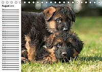Deutscher Schäferhund - Welpen (Tischkalender 2019 DIN A5 quer) - Produktdetailbild 8
