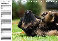 Deutscher Schäferhund - Welpen (Tischkalender 2019 DIN A5 quer) - Produktdetailbild 10