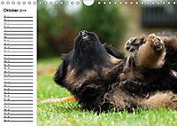 Deutscher Schäferhund - Welpen (Wandkalender 2019 DIN A4 quer) - Produktdetailbild 10