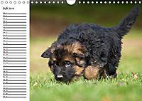Deutscher Schäferhund - Welpen (Wandkalender 2019 DIN A4 quer) - Produktdetailbild 7