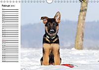Deutscher Schäferhund - Welpen (Wandkalender 2019 DIN A4 quer) - Produktdetailbild 2