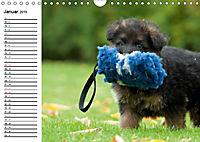 Deutscher Schäferhund - Welpen (Wandkalender 2019 DIN A4 quer) - Produktdetailbild 1