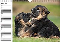 Deutscher Schäferhund - Welpen (Wandkalender 2019 DIN A4 quer) - Produktdetailbild 3
