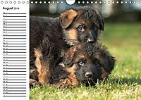Deutscher Schäferhund - Welpen (Wandkalender 2019 DIN A4 quer) - Produktdetailbild 8