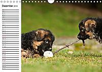 Deutscher Schäferhund - Welpen (Wandkalender 2019 DIN A4 quer) - Produktdetailbild 12