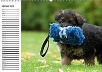 Deutscher Schäferhund - Welpen (Wandkalender 2019 DIN A2 quer) - Produktdetailbild 1