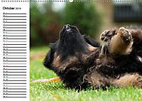 Deutscher Schäferhund - Welpen (Wandkalender 2019 DIN A2 quer) - Produktdetailbild 10