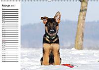 Deutscher Schäferhund - Welpen (Wandkalender 2019 DIN A2 quer) - Produktdetailbild 2