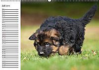 Deutscher Schäferhund - Welpen (Wandkalender 2019 DIN A2 quer) - Produktdetailbild 7