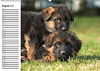 Deutscher Schäferhund - Welpen (Wandkalender 2019 DIN A2 quer) - Produktdetailbild 8
