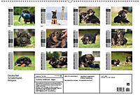 Deutscher Schäferhund - Welpen (Wandkalender 2019 DIN A2 quer) - Produktdetailbild 13