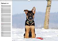 Deutscher Schäferhund - Welpen (Wandkalender 2019 DIN A3 quer) - Produktdetailbild 2