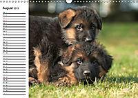 Deutscher Schäferhund - Welpen (Wandkalender 2019 DIN A3 quer) - Produktdetailbild 8