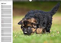 Deutscher Schäferhund - Welpen (Wandkalender 2019 DIN A3 quer) - Produktdetailbild 7